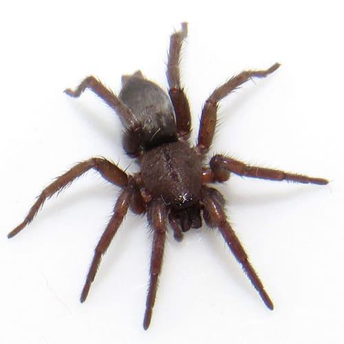 spider-pest-control