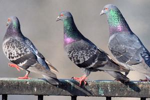 bird-proofing-bird-control