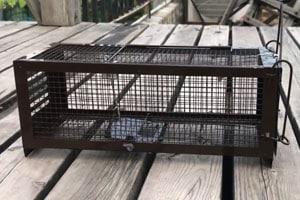 humane-rat-mouse-trap