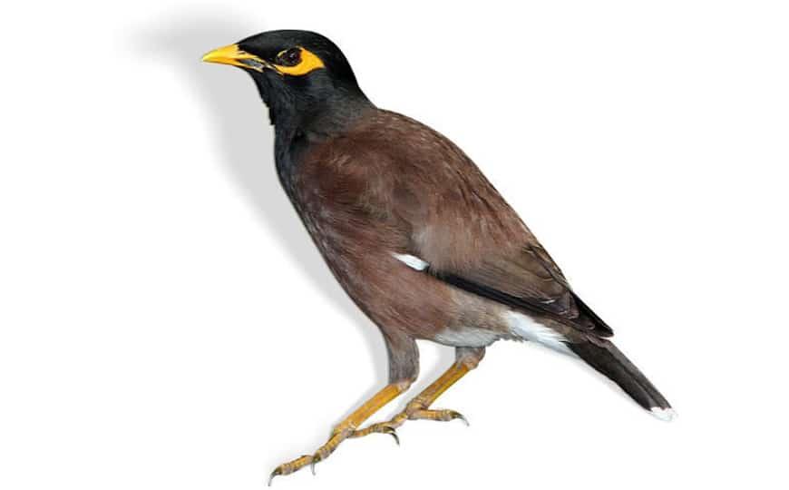 pest-control-bird-control-sydney