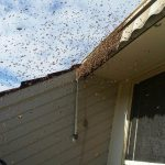 bees wasps pest control