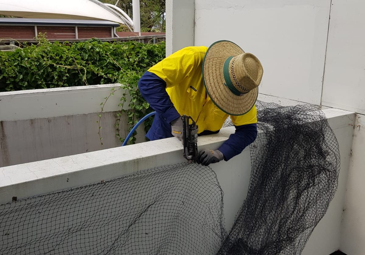 bird proofing using netting